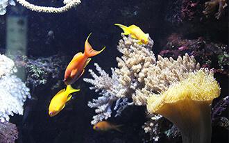 בית הים - עולם הים - Haus des Meeres