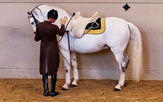 מופע הסוסים המרהיב של בית הספר הספרדי לרכיבה - Spanish Riding School Show