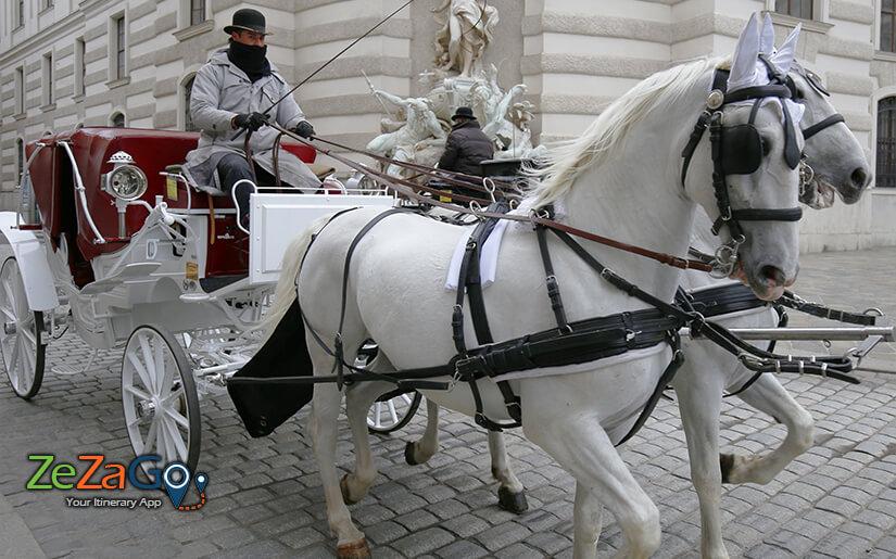 סיור חוויתי בכרכרה רתומה לסוסים