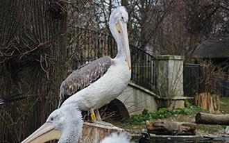 גן החיות שנברון - Vienna Zoo