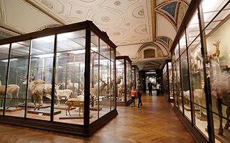 מוזיאון ההיסטוריה של הטבע - Naturhistorisches Museum